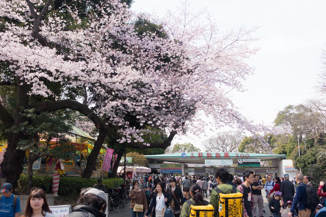 上野公園12
